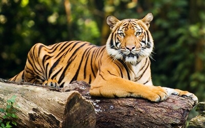 Zoo Negara: Entrance Ticket for 1 Adult (Malaysian Only)