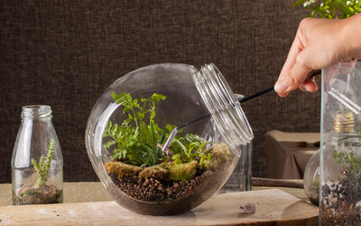 2-Hour Terrarium Workshop for 1 Person