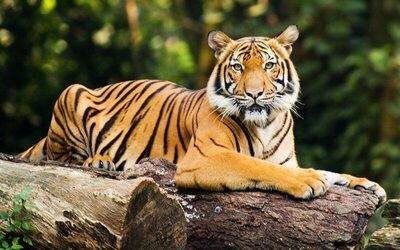 Entrance Tickets to Zoo Negara for 2 Adults and 1 Child (Malaysian Only)