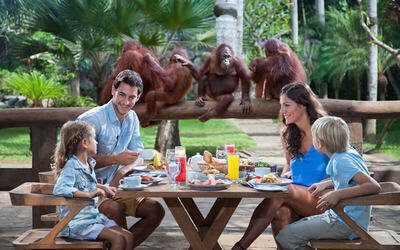 Bali: Breakfast with Orangutan for 1 Adult