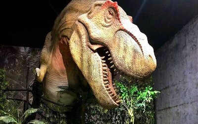 Set C: Admission to Ripley's Believe It or Not Odditorium + Jurassic Research Center for 1 Adult