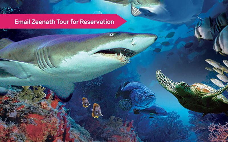 Aquaria KLCC Admission for 1 Child (Non-MyKad Holder)
