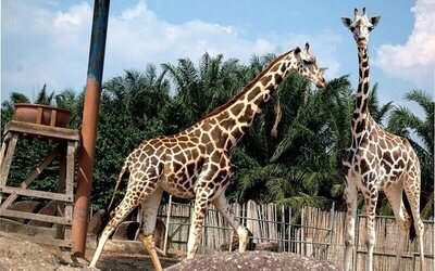 1-Day Admission Ticket to Safari Wonderland for 1 Adult