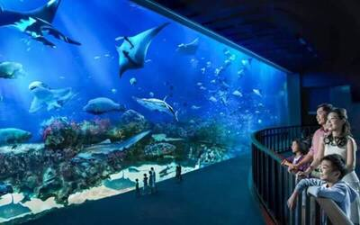 Admission to S.E.A Aquarium Singapore for 1 Child / Senior Citizen