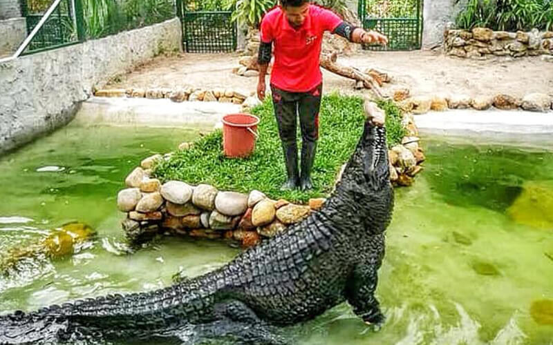 Juvenile Crocodile Feeding: Adult Admission Ticket to Crocodile Adventure Land Langkawi for 1 Person (Malaysian)