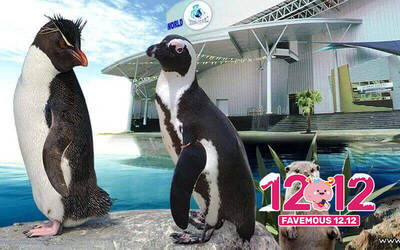 [12.12] Admission to Underwater World Langkawi for 1 Adult (MyKad Holders)