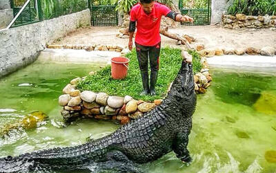 Juvenile Crocodile Feeding: Adult Admission Ticket to Crocodile Adventure Land Langkawi for 1 Person (Non-Malaysian)