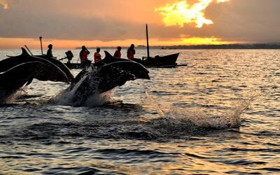 Dolphin Experience Tour + Local Tour for 1 Person
