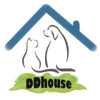 DDhouse featured image