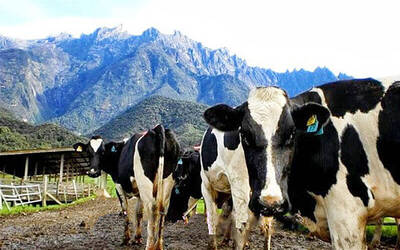 1-Day Tour of Kinabalu Park, Poring Hot Spring, and Desa Cattle Dairy Farm for 2 Adults