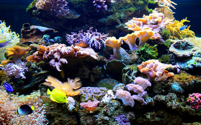 Blue Coral Aquarium Admission for 1 Person