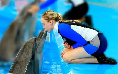 Phuket: Admission to Dolphin Show (VIP Seat) for 1 Child
