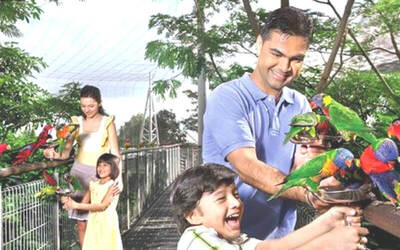 Admission to Singapore Jurong Bird Park + Tram Ride for 1 Child