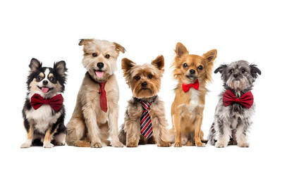 Basic Grooming + Free Pick-Up and Drop-Off for 1 Dog (Large-Size Breed)