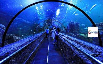 Entrance Ticket Seaworld Premium untuk 1 Orang