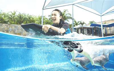 Singapore : Dolphin Adventure + Adventure Cove Pass for 1 Adult