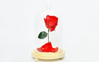 1-Enchanted Lasting Rose with LED in Glass Jar