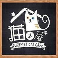 Purrfect Cat cafe featured image