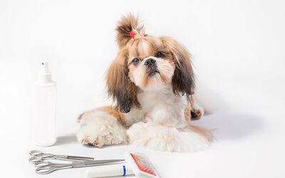 Door-to-Door Basic Pet Grooming Service for 1 Dog