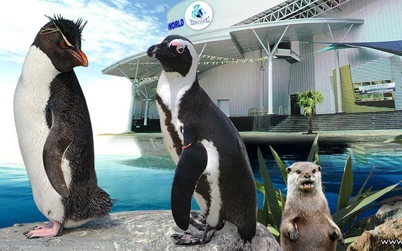 Admission to Underwater World Langkawi for 1 Adult (Non-MyKad Holders)